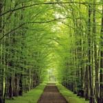 Trail-through-forest1.jpg Thumbnail